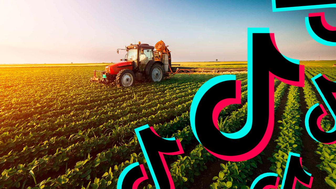 TikTok позволил фермерам увеличить прибыль в 15 раз
